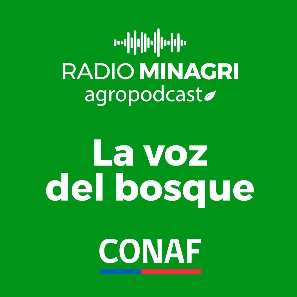 La voz del bosque – Episodio 25: Ave más pequeña de Chile