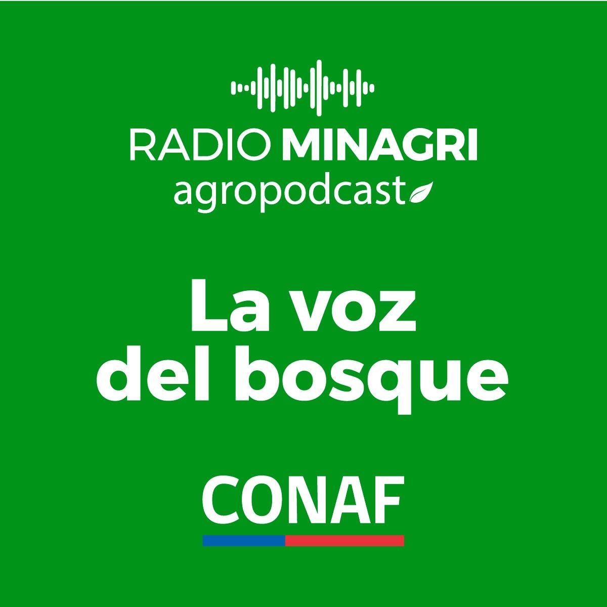 La voz del bosque – Episodio 32: Oficina Virtual de CONAF