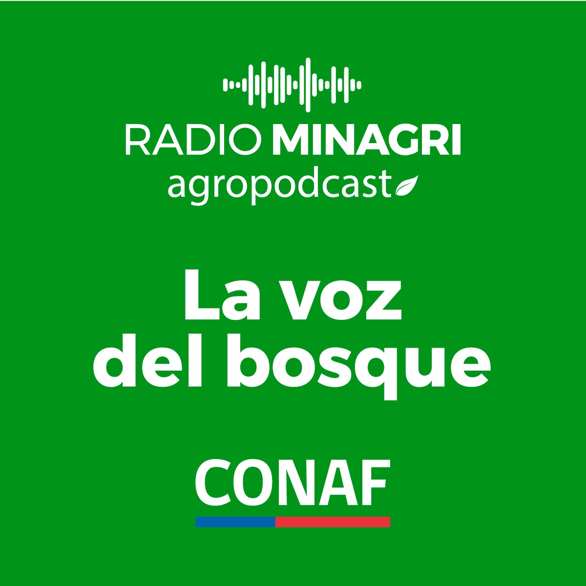La voz del bosque – Episodio 12: Manejo de bosque nativo