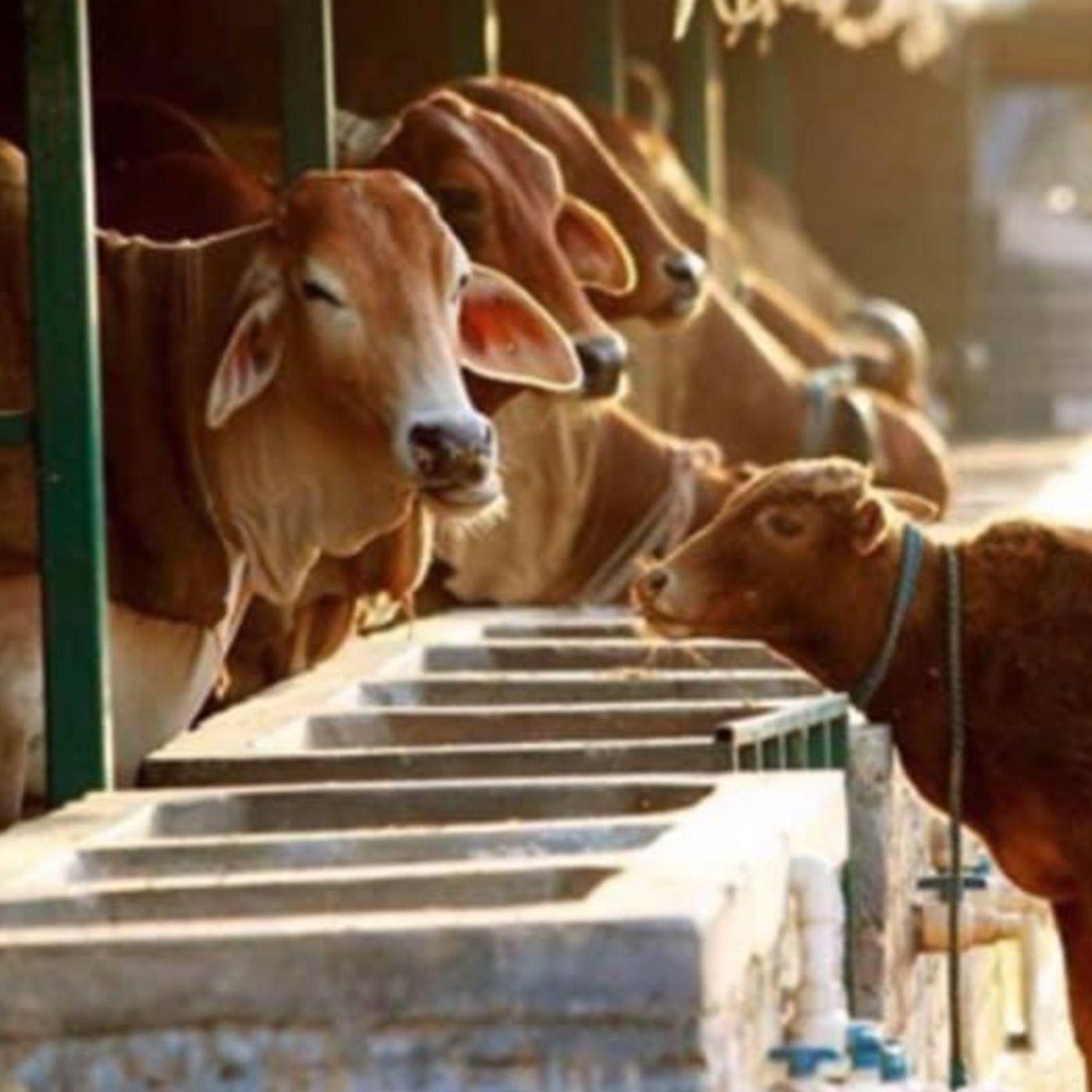 Beejom Farm - Animal Sanctuary and Sustainable Regenerative Agriculture