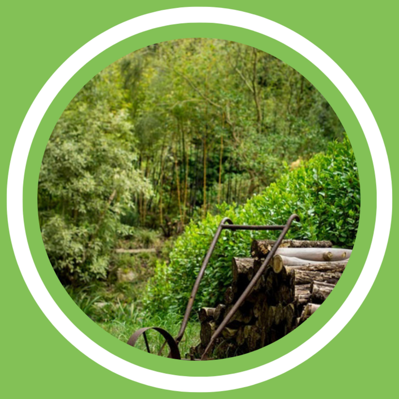 Jeanne Delaurent - La forêt jardin (FR)