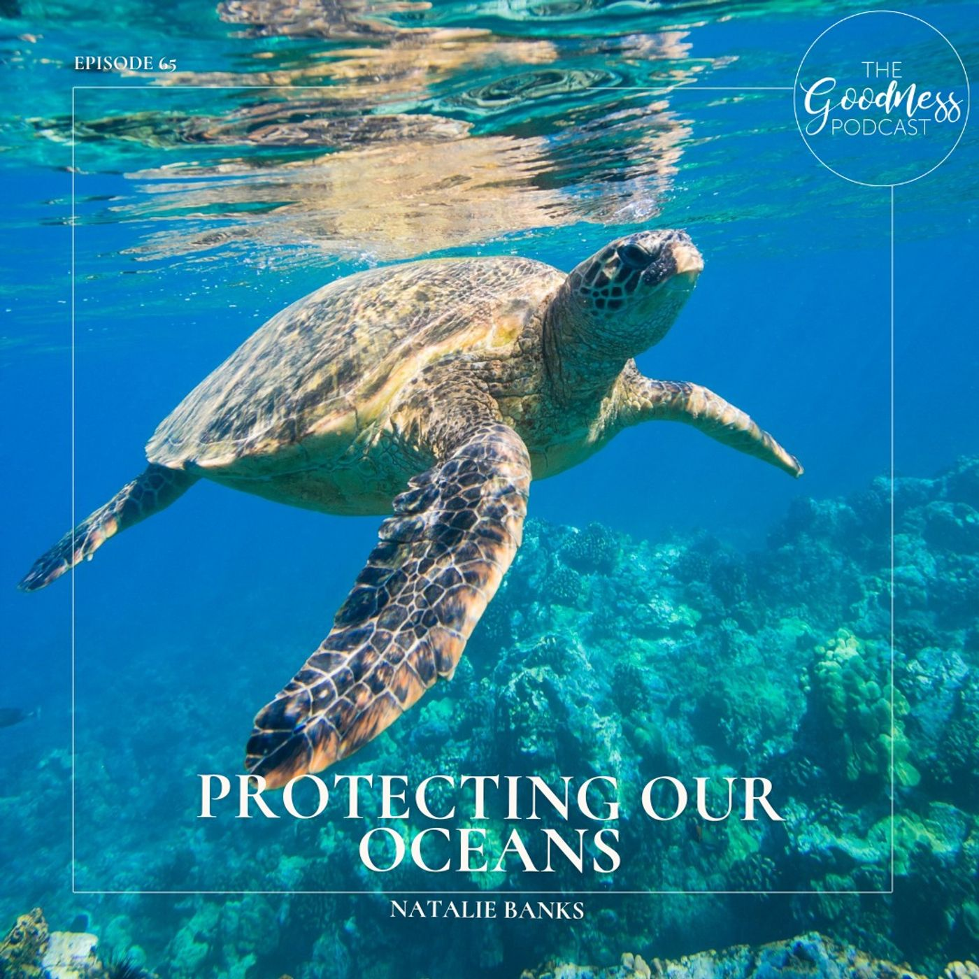 Natalie Banks: Protecting Our Oceans