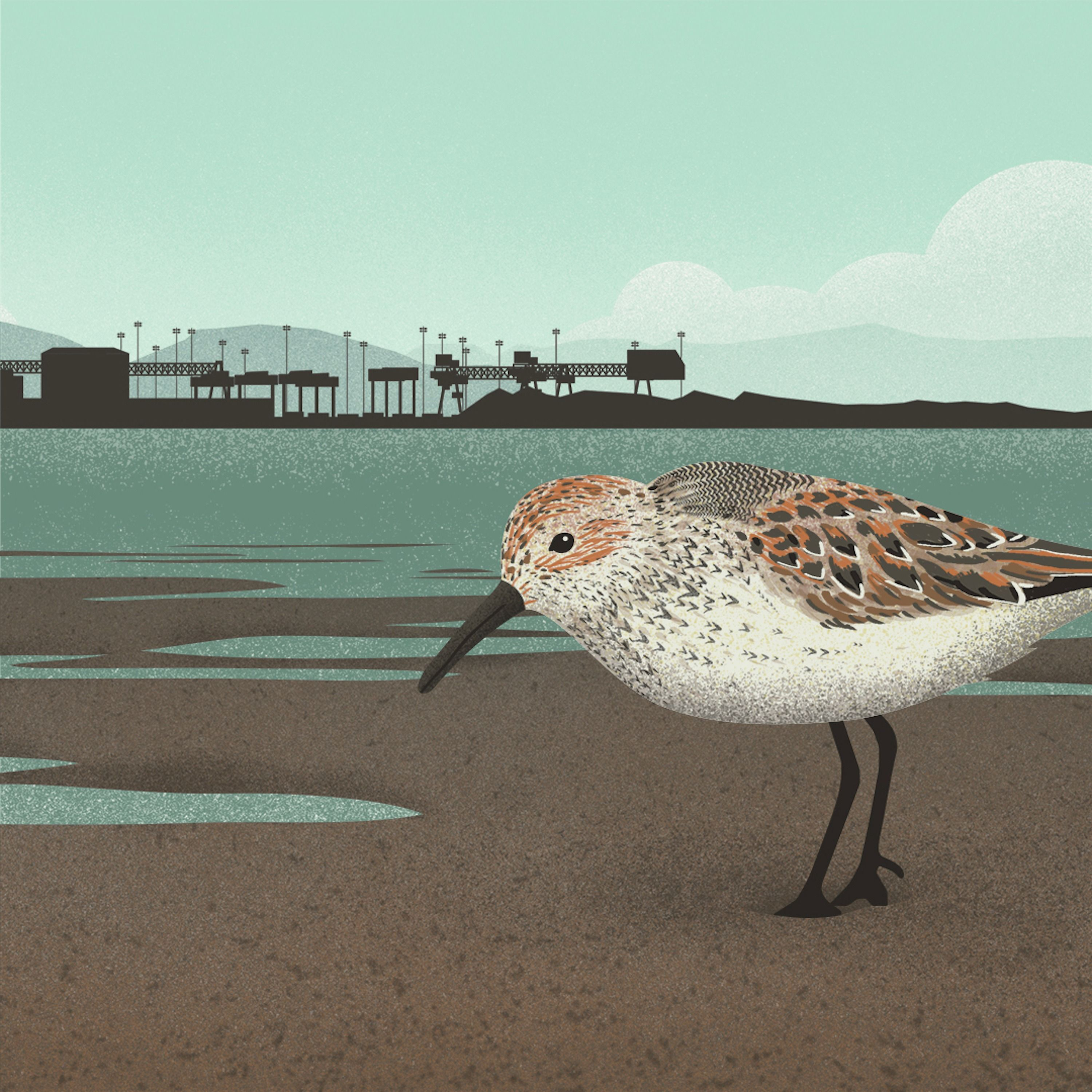 Watching Over Western Sandpipers