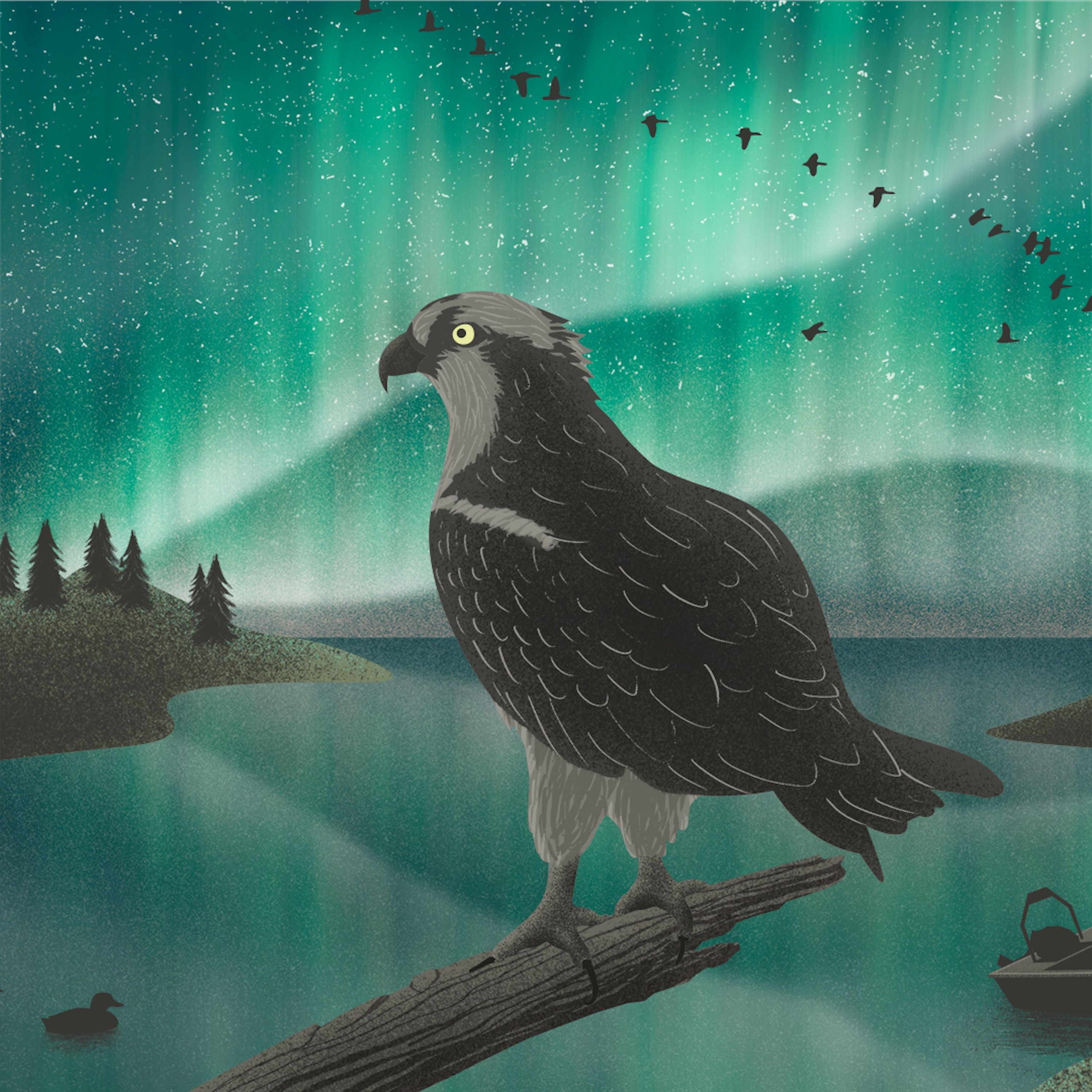 Protecting Biodiversity in the Boreal Forest